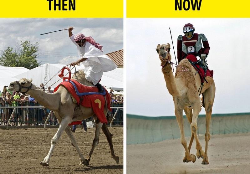 Kết quả hình ảnh cho đua lạc đà UAE